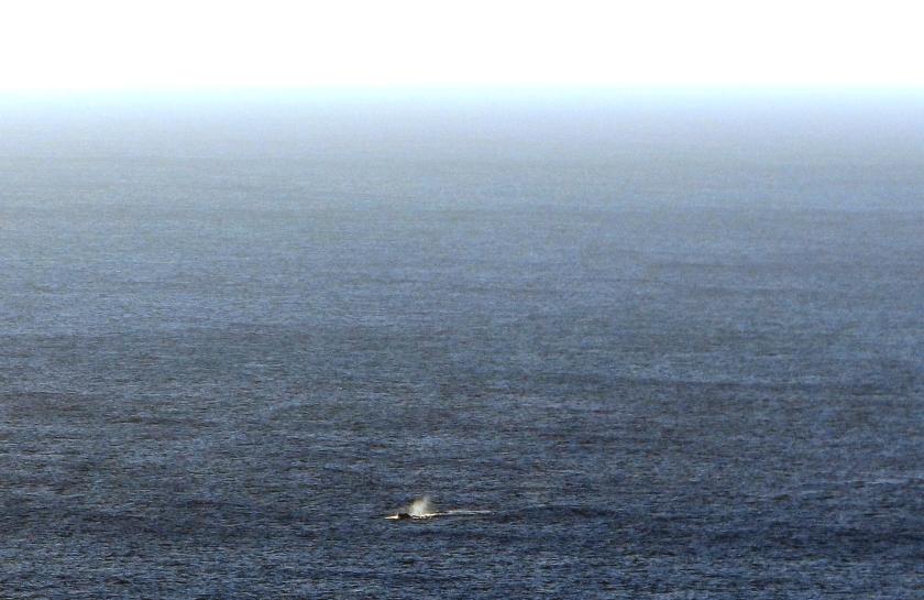 Whales 2.JPG